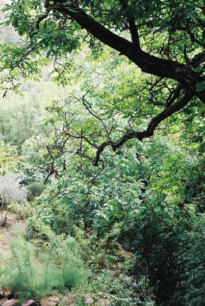 Trees 0997