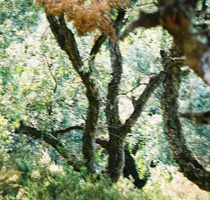 Trees 0998