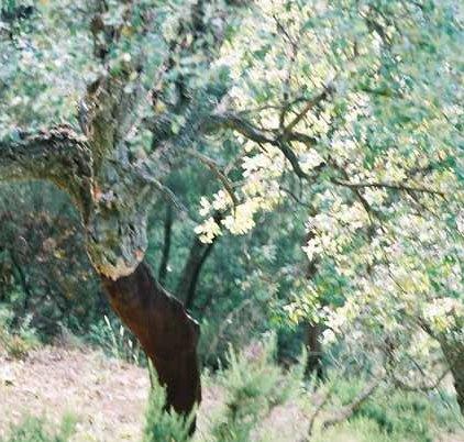 Trees 0999