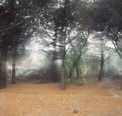 Trees 1001