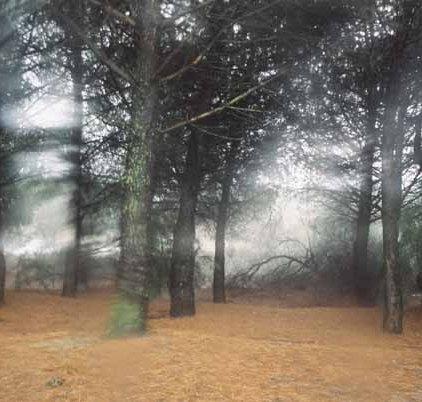 Trees 1002