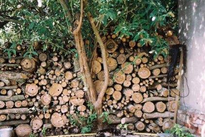 Trees 1003
