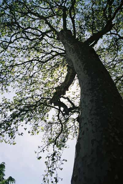 Trees 1004