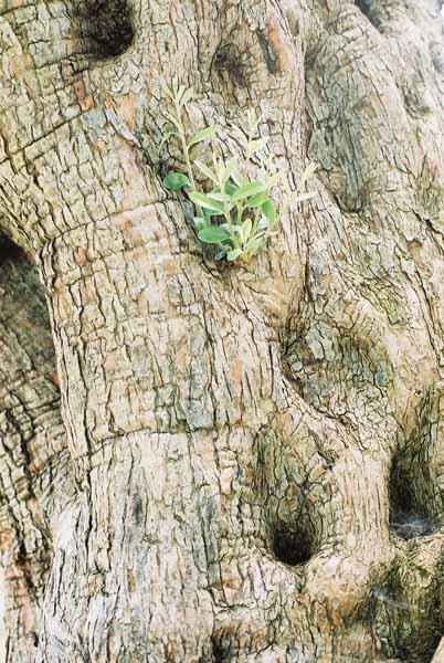Trees 1008