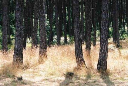 Trees 1009