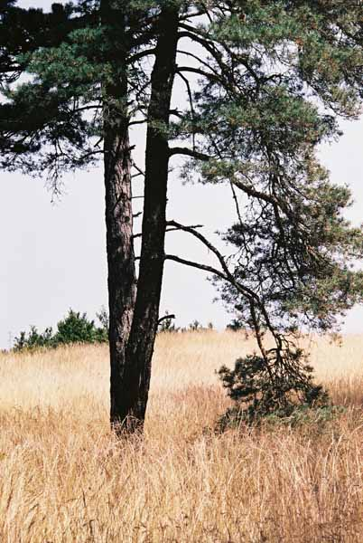 Trees 1011