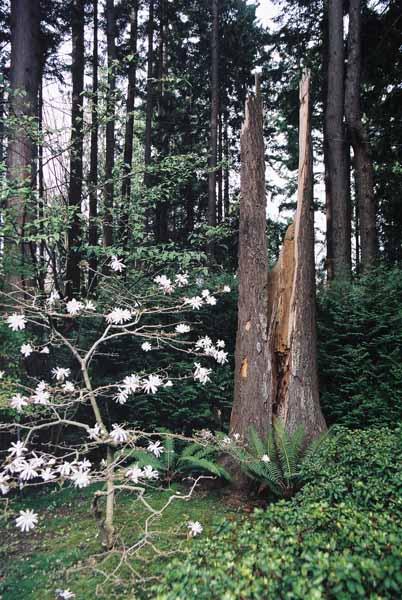 Trees 1015