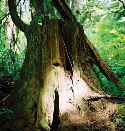 Trees 1017