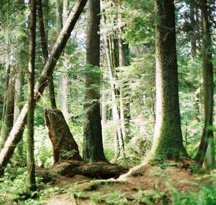 Trees 1018