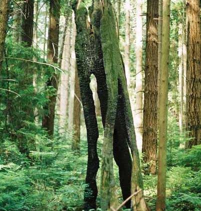 Trees 1019