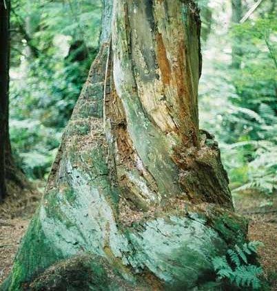 Trees 1020