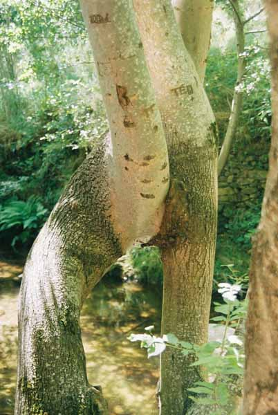 Trees 1021