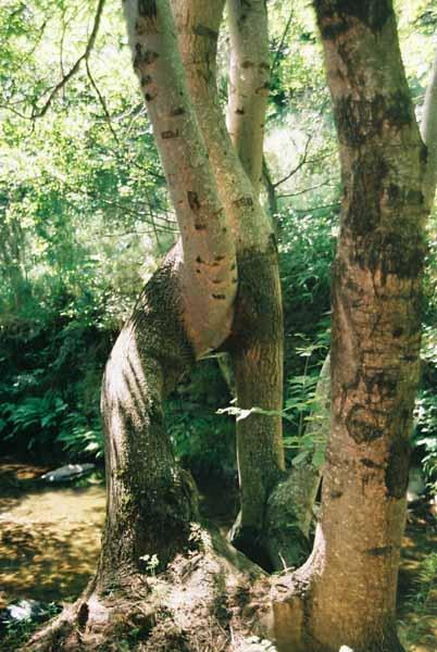 Trees 1022