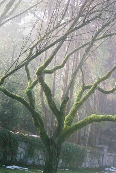 Trees 1024