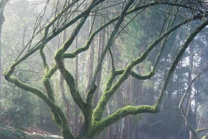 Trees 1025