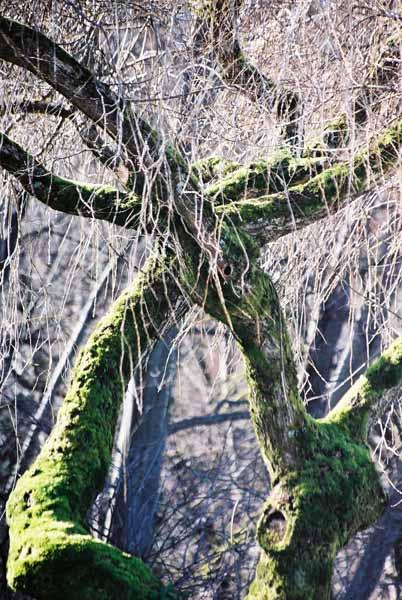 Trees 1026