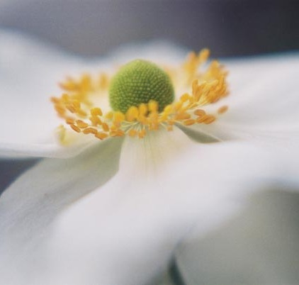 White Flowers 13