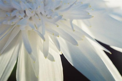 White Flowers 15
