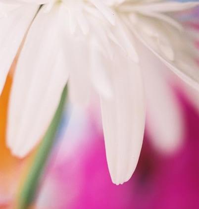 White Flowers 17