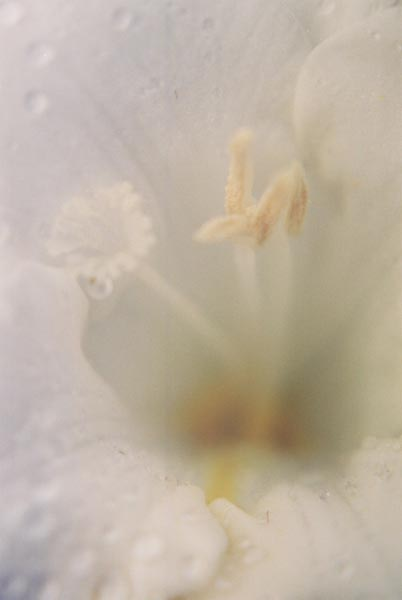 White Flowers 18