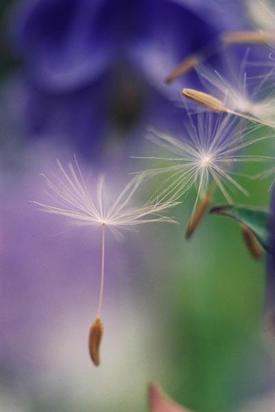 Blue Purple 19