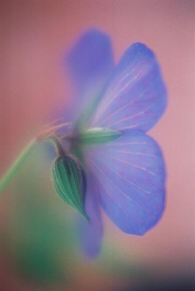Blue Purple 22