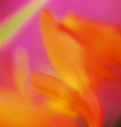 Orange Abstract 28