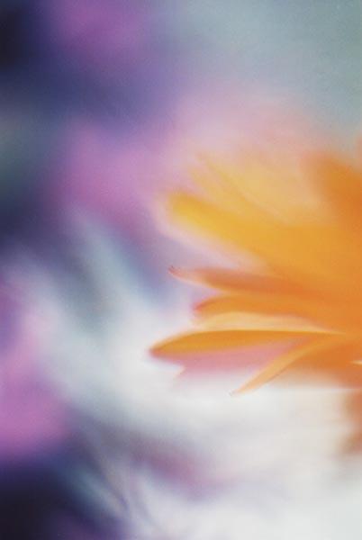 Orange Abstract 30