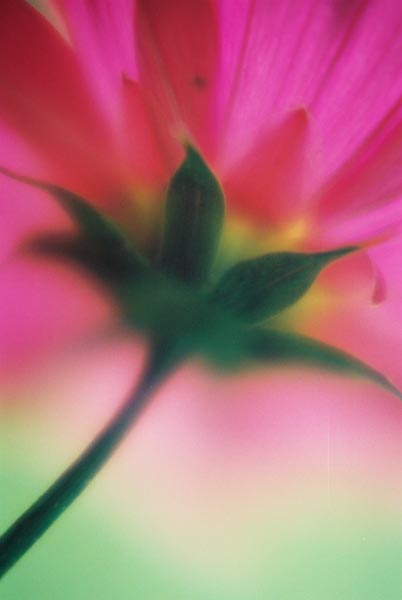Pink Abstract 35