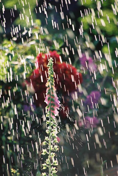 Water Drops 38