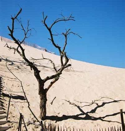 La Dune du Pyla 895