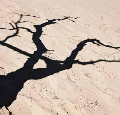 La Dune du Pyla 903