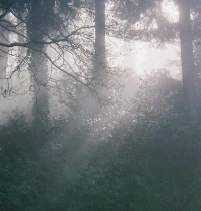 Black Trees 3