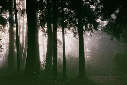 Black Trees 4