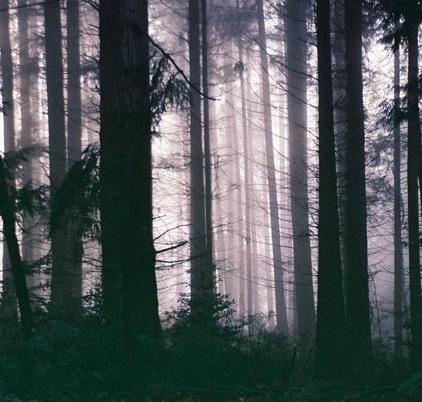 Black Trees 5