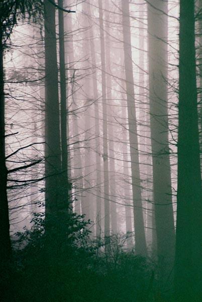 Black Trees 6