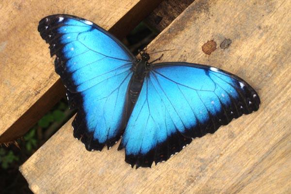 Butterflies & Ladybugs