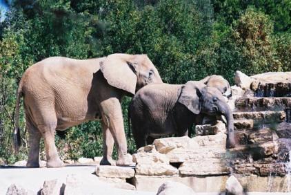 Elephants 38