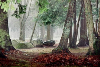 Trees in Fog 7