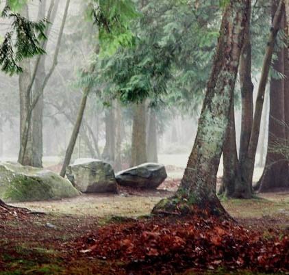 Trees in Fog 7