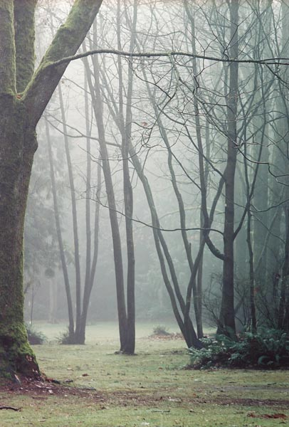 Trees in Fog 8