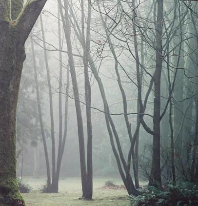 Trees in Fog 8