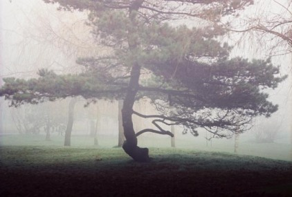 Trees in Fog 9
