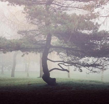 Trees in Fog 9