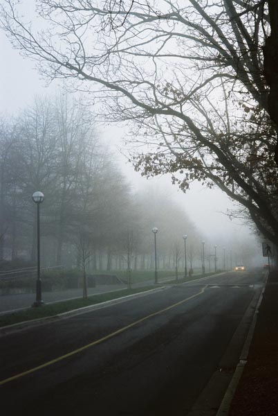 Trees in Fog 11