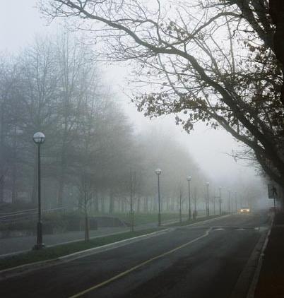 Trees in Fog 11