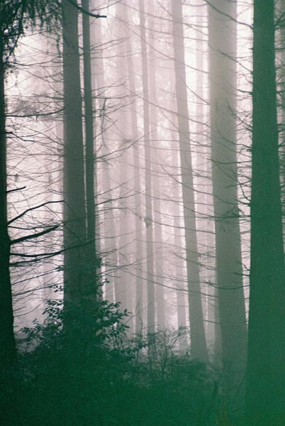 Trees in Fog 12