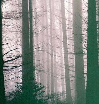 Trees in Fog 12