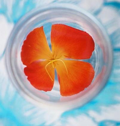 Poppies 30