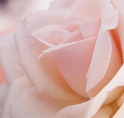 Roses 16
